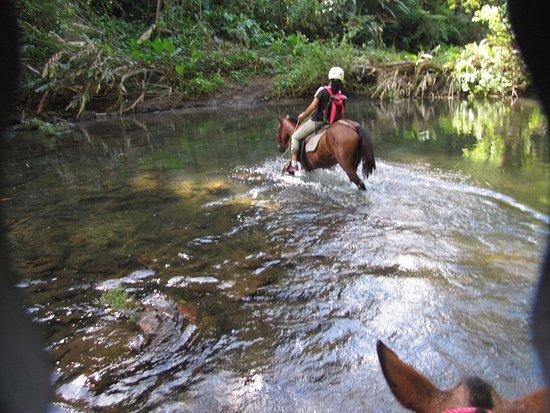 Horse back riding through primal rain forest in Drake Bay