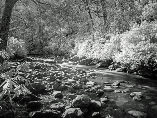 Cosby, TN : Creek side