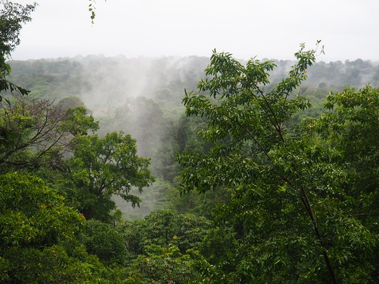 Manzanillo, Costa Rica: View on the steamy jungle
