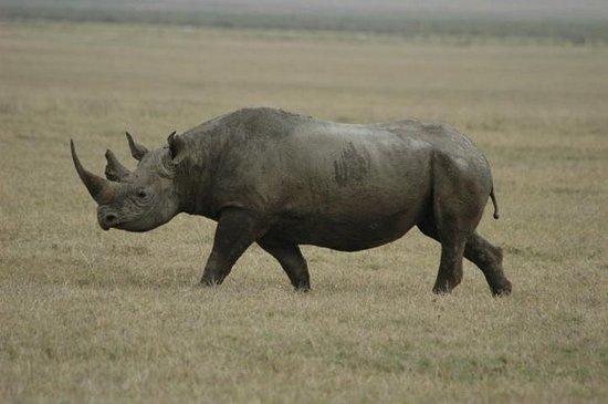 andBeyond Ngorongoro Crater Lodge: Fauna en el cráter