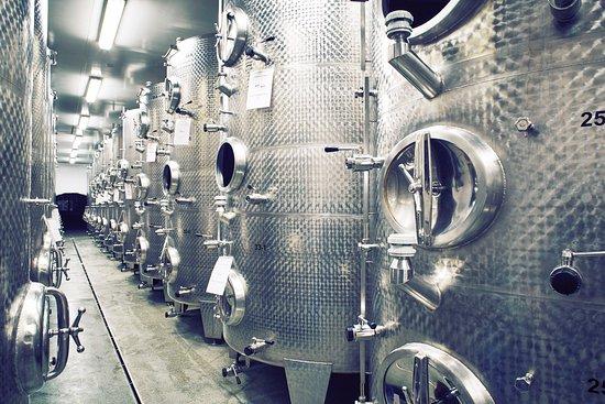 Tulln, Österrike: Weinkeller