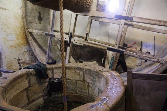 Newport, UK : Donkey at Carisbrooke