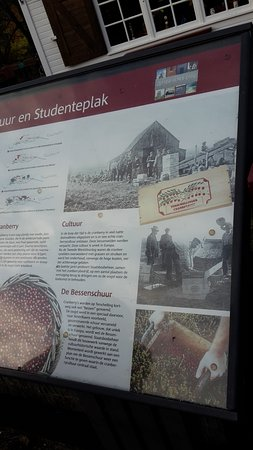 West-Terschelling, The Netherlands: text on cranberries on the island