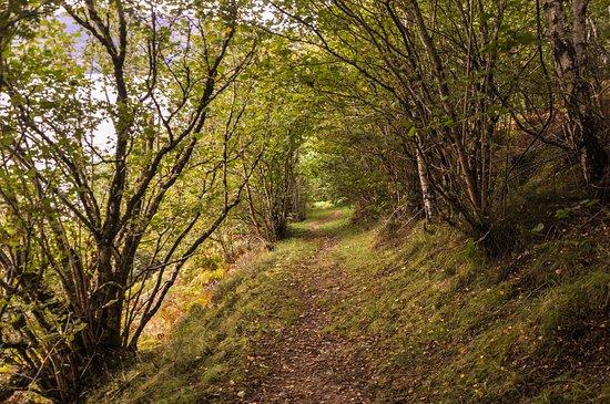 Abriachan Forest: En un cuento caminamos felices