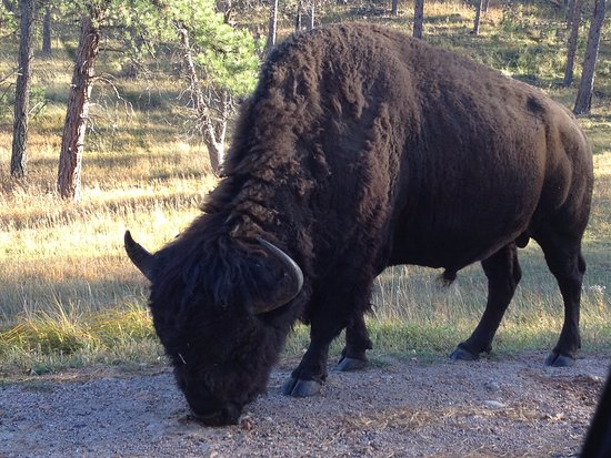 Custer State Park: One of the many natural attractions throughout the park