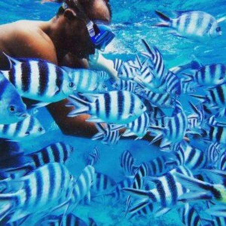 Kendwa, Tanzania: Snorkeling around Mnemba Island with Hope Dhow