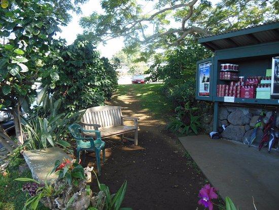 Kealakekua, Havaí: Nice quiet bench