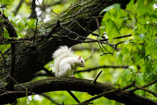 Montello, วิสคอนซิน: We have a local population of albino squirrels that can be spotted roaming through the campgroun