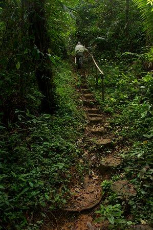 Boca Tapada, Costa Rica: senderos en el bosque