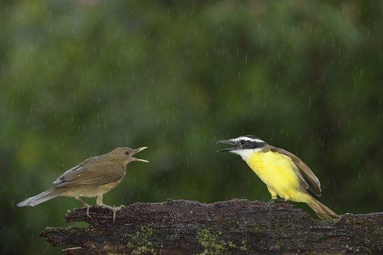 Boca Tapada, Costa Rica: Bird Photography