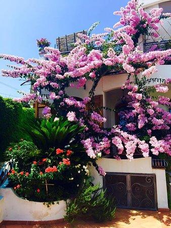 Magnolia House: Ingresso
