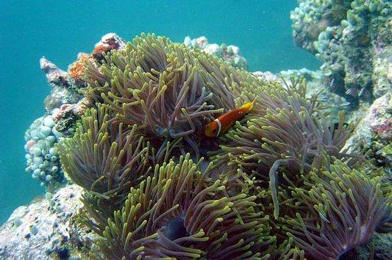 Tanjungbenoa, Indonezja: Bali snorkeling