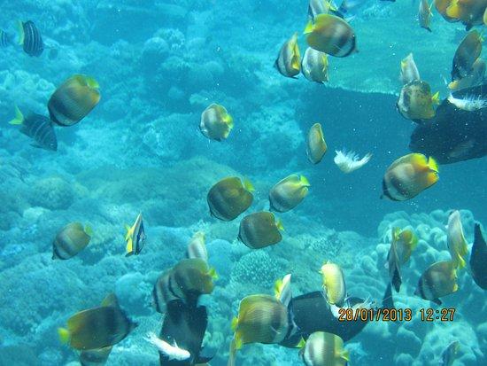 Tanjung Benoa, Indonesia: snorkeling trips