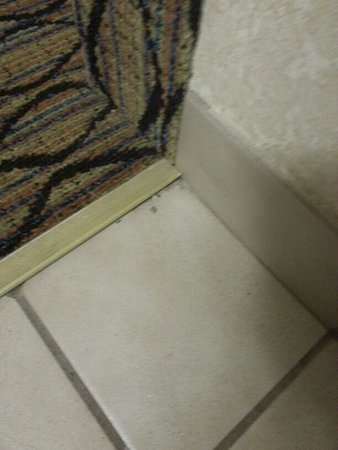 Canton, MI: Dirt in bathroom and all around room.