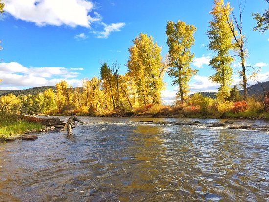 Philipsburg, MT: Fly fishing on Rock Creek under the falling leaves.