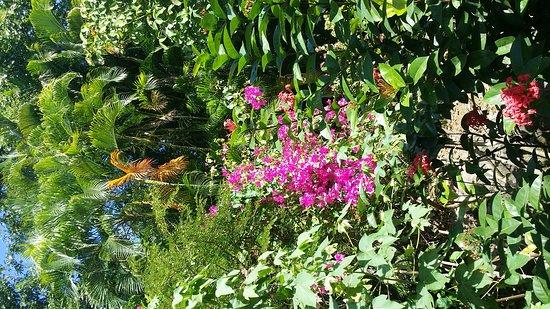 Deshaies, Γουαδελούπη: 20170119_134422_large.jpg