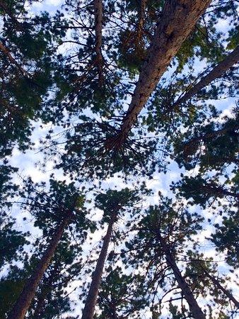 Millinocket, ME: looking up from campsite