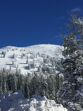 Grand Targhee Ski Resort: Fresh Powder Day!