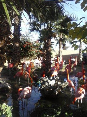 Litchfield Park, AZ: Flamingos