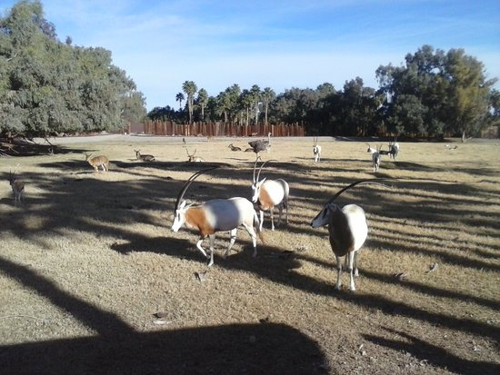 Litchfield Park, AZ: African Safari