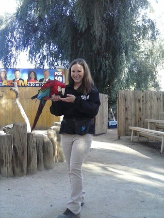 Litchfield Park, AZ: Macaw parrot at wildlife show