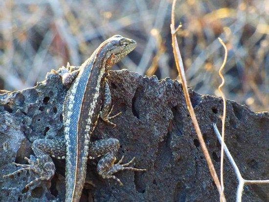 Puerto Baquerizo Moreno, Ekwador: Fauna que se ve en en cerro