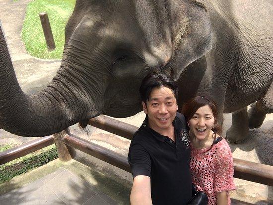 Tegalalang, Indonesia: お絵描きする象さん、象さんに触ったり乗ったりしてみたくて訪れました。ビュッフェでランチも楽しめるし、お土産も沢山ありました。博物館のような展示もあり、3~4時間の滞在ですがとても楽しめました。