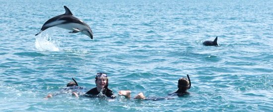 Marlborough Region, Neuseeland: Swimming with dolphins