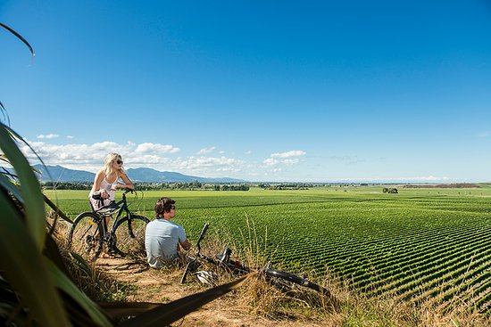 Marlborough Region, Nueva Zelanda: Cycling between winery cellar doors