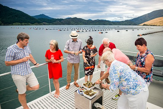 Marlborough Region, Neuseeland: Tasting seafood straight from the source