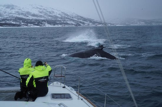 Whale Watching on a Catamaran from...