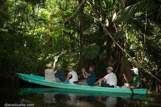 Excursión en canoa en el Parque...
