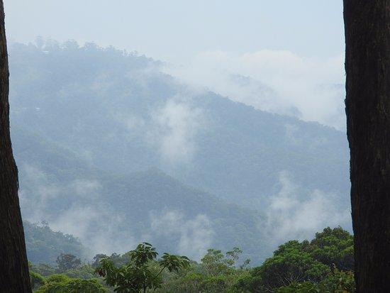 Monte Tamborine Foto