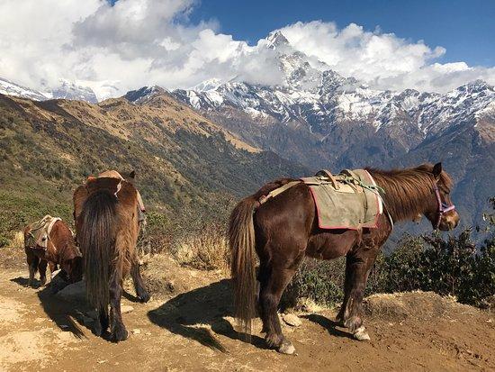 Kathmandu Valley, Νεπάλ: photo6.jpg