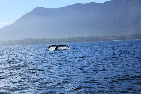Ucluelet, Canadá: whale watching