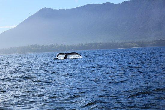 อูกลูเอเลต, แคนาดา: whale watching