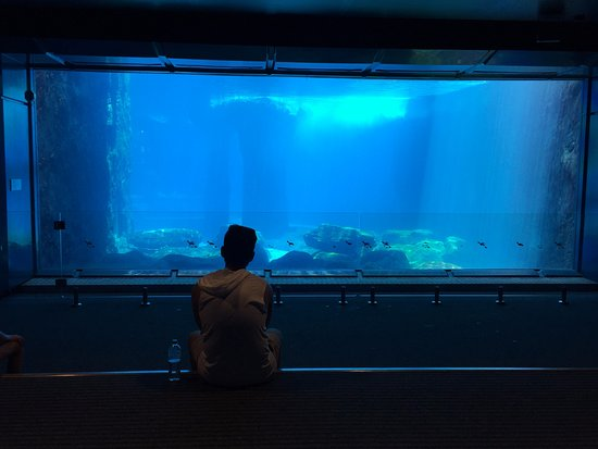 Mosman, Australien: Underwater viewing area for the Seals