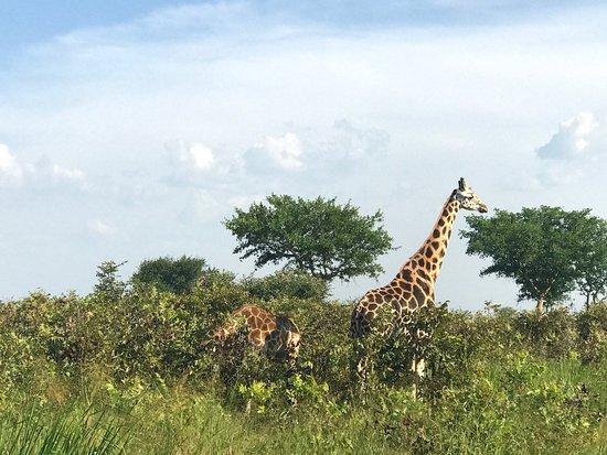 Bwindi Impenetrable National Park, ยูกันดา: photo8.jpg