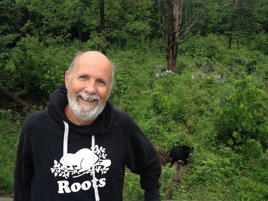 Montebello, Kanada: les ours sont vraiment près 8