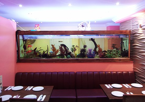 Enfield, UK: The fish tank would be better with a touch of added water.