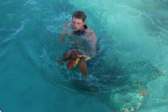 Sandys Parish, Bermudas: One of our Dive Masters rescuing the Turtle