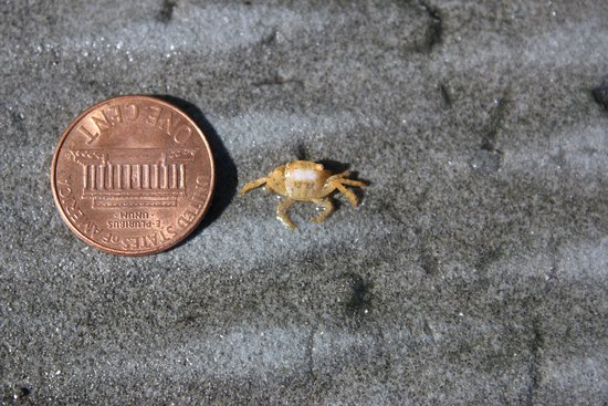 Sandys Parish, Bermudas: Tiny Crabs