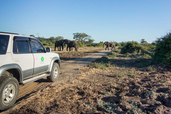 Kasane, Botswana: Self drive safari