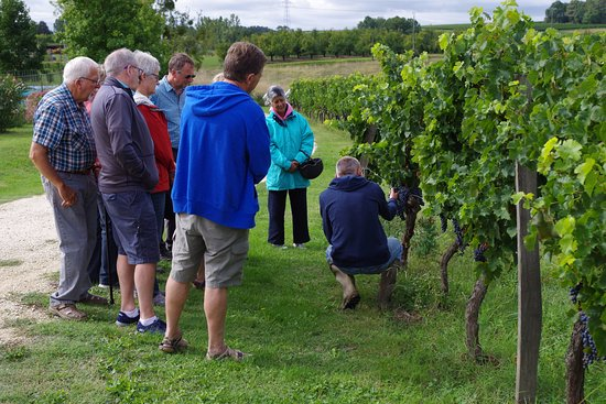 Les Leves-et-Thoumeyragues, Francja: a vineyard tour