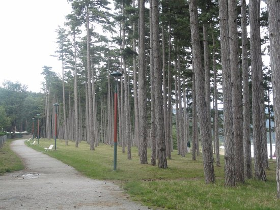 Revel, France : allée de pins