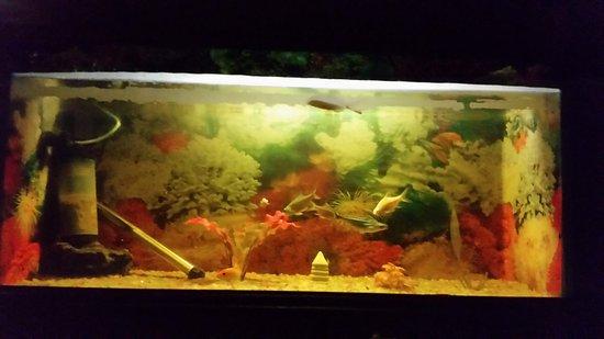 Hotel Hari Piorko: aquarium in the room