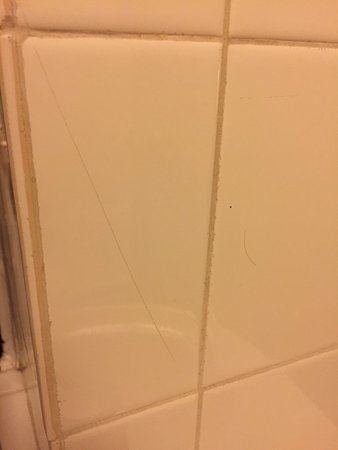 Bromsgrove, UK: foreign hairs over bathroom tiling