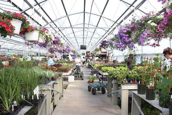Timberville, VA: Our greenhouse opens first week of April!