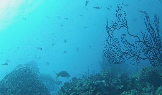 Scuba Steve's Diving Ltd.: Diving St. Lucia