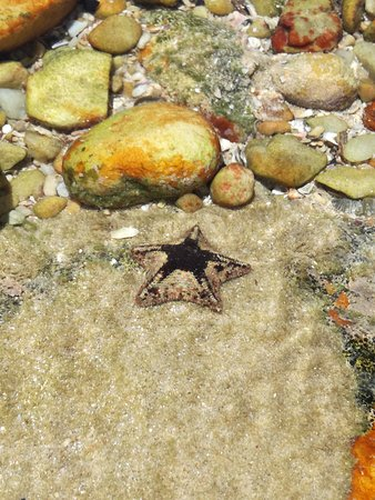 Cape Recife Nature Reserve: Starfish